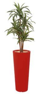 Dracena / Plante artificielle H185 cm Bac rond rouge (ref. 13145)