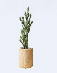 Cactus Tanaman / Plante artificielle décorative H155 cm Tanaman (ref. 29760)