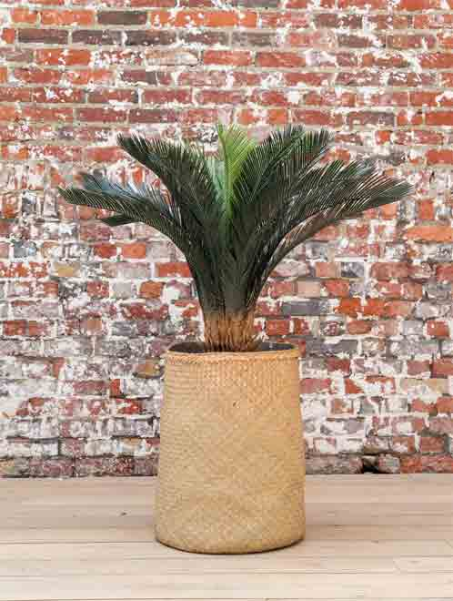 Cyscas Tanaman / Plante artificielle décorative H120 cm Tanaman (ref. 29761)