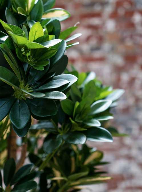 Schefflera Tanaman / Plante artificielle décorative H155 cm Tanaman (ref. 29762)