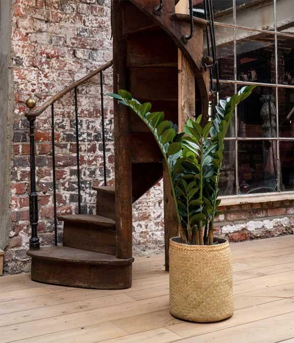 Zamia Tanaman / Plante artificielle décorative H100 cm Tanaman (ref. 29763)