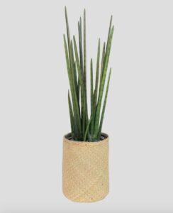 Sanseviera Tanaman / Plante artificielle décorative H105 cm Tanaman (ref. 29765)